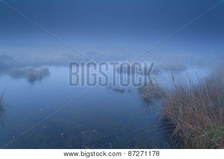 Foggy Swamp In Dusk