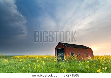 Farmhouse On Rapeseed Field At Sunset