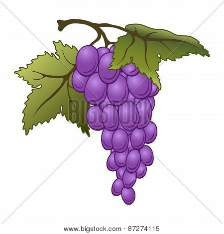 Vector Grapes.