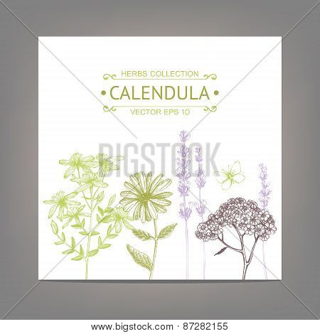Vintage illustration with herbal flowers illustration.