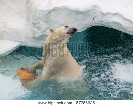 Smart Polar Bear