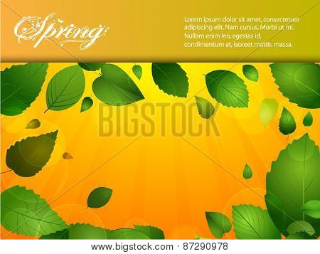Spring Background With Leafs And Sunshine