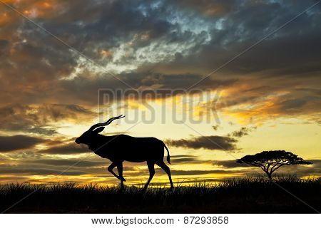 animal in african