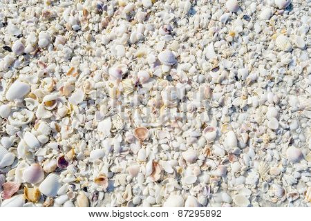 Seashell Textures