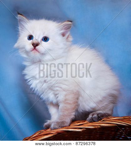 Kitten On Basket