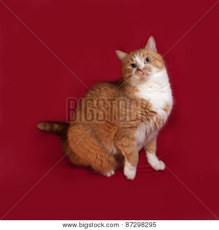 Thick Red Cat Sitting On Red