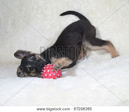 Small Black And Yellow Puppy Playing Ball On Fur Sofa