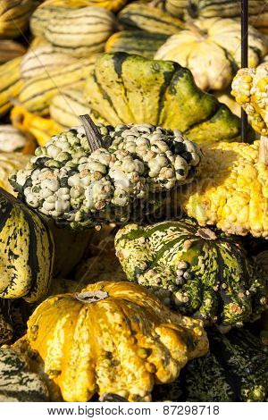 Warted Patission Cucurbita Pumpkin Pumpkins From Autumn Harvest