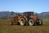 picture of maize  - Passirano  - JPG
