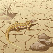 picture of steppes  - Steppe  lizard crawling on cracked ground near rocks and plants - JPG