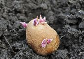 foto of germination  - close - JPG
