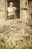 picture of excrement  - Farmer Shoveling the Horse Manure out of the Barn - JPG