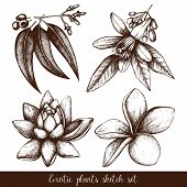 foto of tropical plants  - Vector set of ink hand drawn exotic plants and flowers isolated on white background - JPG