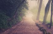 stock photo of fog  - Road through a golden forest with fog and warm light - JPG