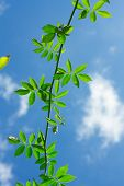 foto of creeper  - The Green Creeper Plant on background sky - JPG