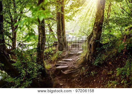 path and steps in the beautiful magic forest