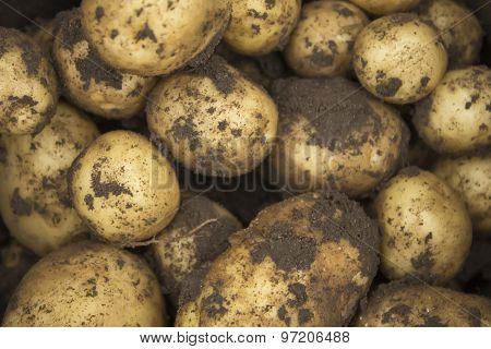 Dirty Potatoes