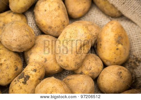 Raw white unpeeled dirty potatoes