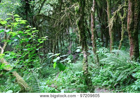 Moss On Trees And Ferns