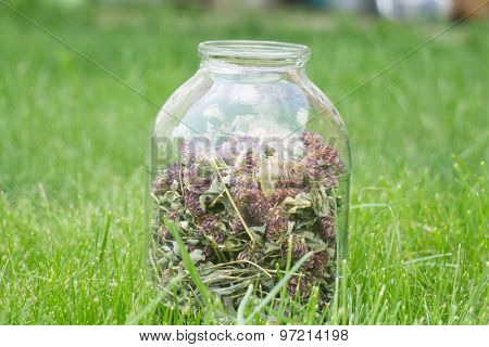 glass jar with dried clover on green grass