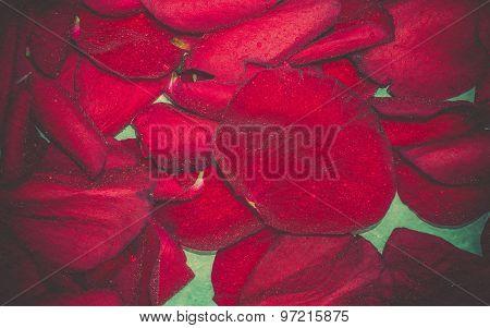 Red Rose Petals Retro