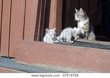 White Kittens And Mother