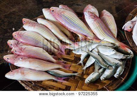 Fresh fish at the market.