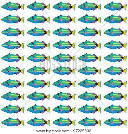 Halfmoon Triggerfish Pattern