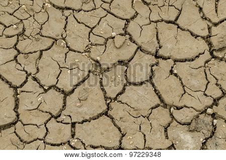 Dried land in the field