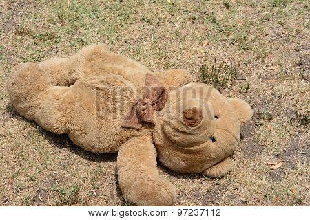 Is Teddy okay?