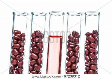 Red Beans Genetically Modified, Plant Cell