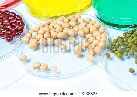 Legume With Wheat Genetically Modified, Plant Cell