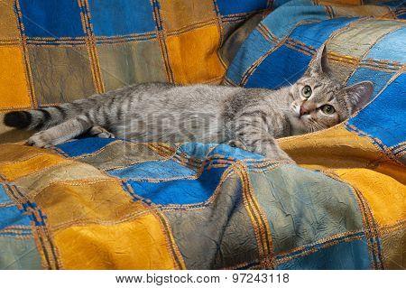 Striped Cat Lying On Motley Blanket
