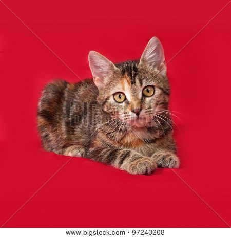 Tricolor Kitten Lies On Red