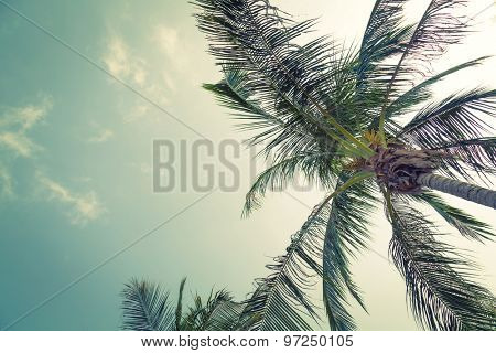 Coconut palm trees ( Filtered image processed vintage effect. )