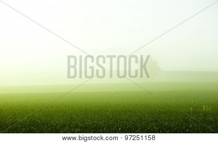 Fog over the green field