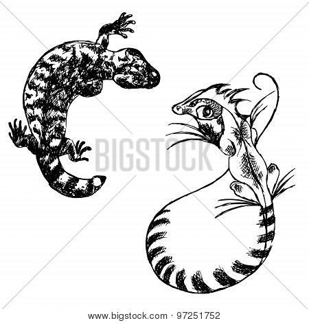 Lizard Gekon And Basilisk