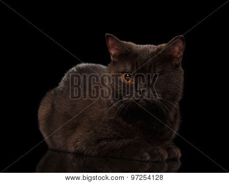 Brown One-eyed Cat Lying On Black