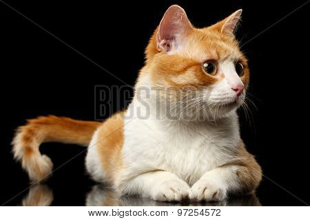 Lying Ginger Cat Surprised Looking At Right On Black Mirror