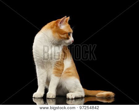 Surprised Ginger Cat Sits On Black Mirror Looking At Right