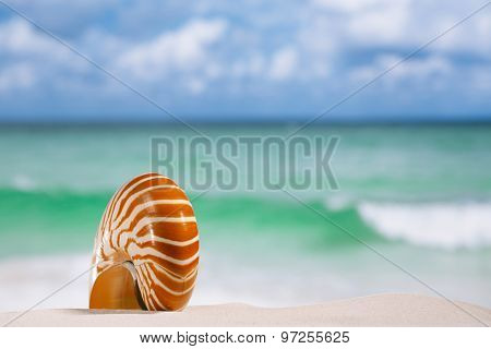 nautilus shell on white sandy beach sand under the sun light, shallow dof