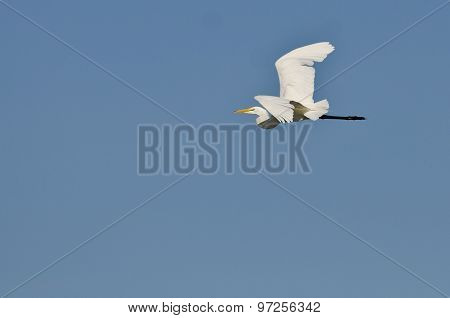White Great Egret Flying In A Blue Sky