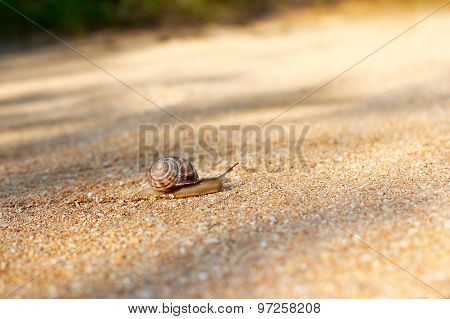 Snail Crawling Forward