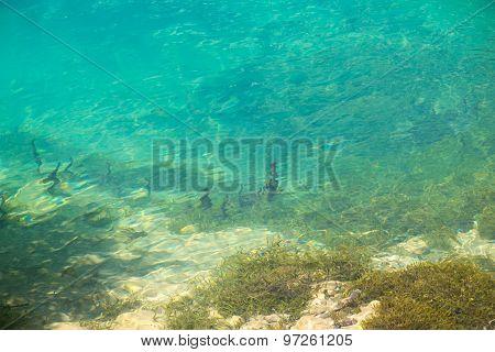 Photo of algae under water