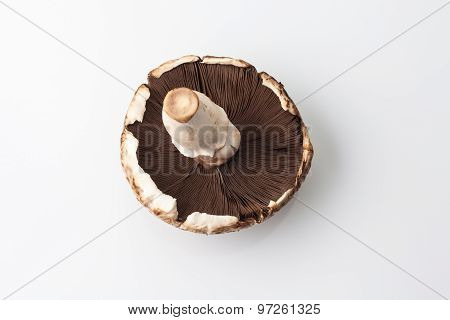 One big champignon mushroom upside down