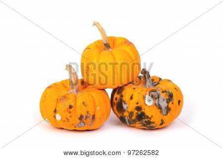 Closeup Of  Rotten Pumpkin