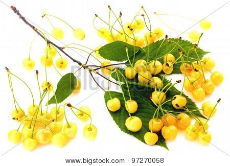 White cherries isolated on white