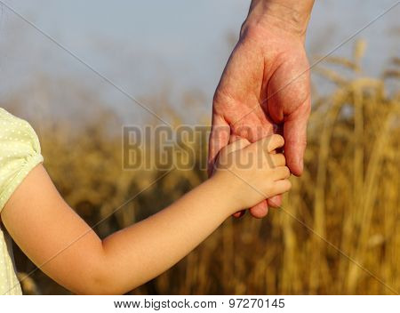 hands of child and father on wheat field