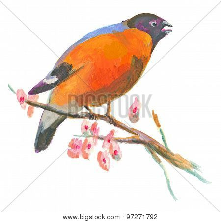 An Hand Painted Illustration On White - Bird, Eurasian Bullfinch