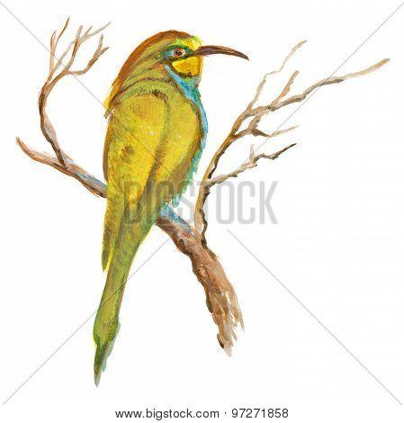 An Hand Painted Illustration On White - Bird, European Bee-eater